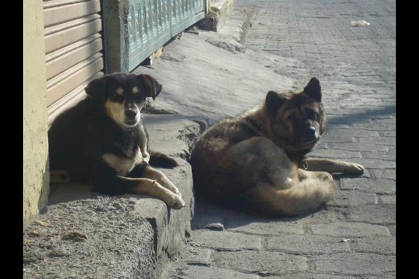 Alerta por muerte de perros