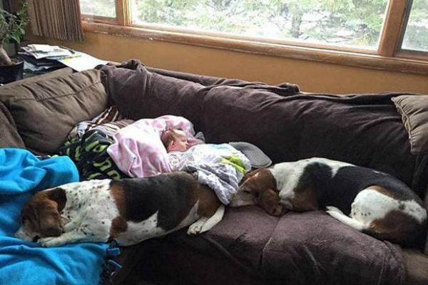 perros se niegan a abandonar a su pequeña ama