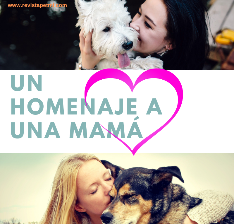 mamás y mascotas pet lover