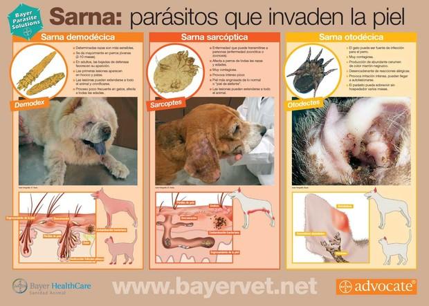 Cuadro de Sarna Bayer