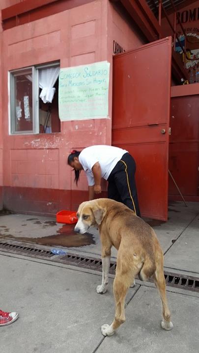 Comedor solidario para mascotas