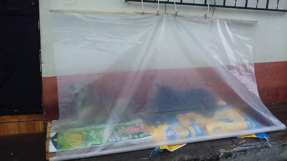 perros de la calle en época de lluvia