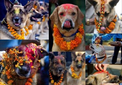 Festival Kukur Tihar