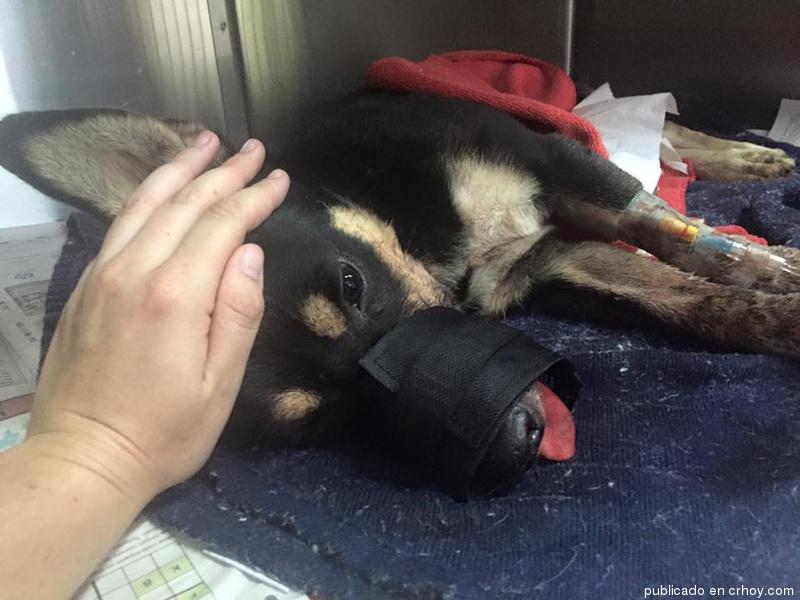 Duke el perro que perdió su hocico y sobrevivió al maltrato animal