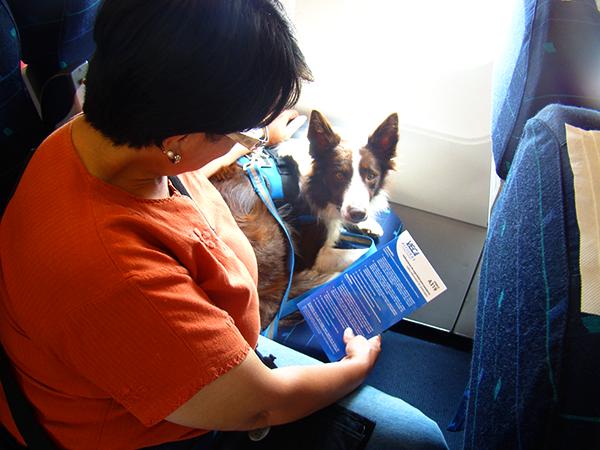 De viaje con nuestra mascota