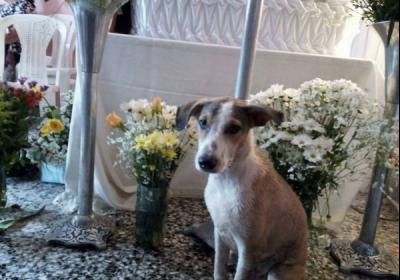 Perrito fiel acompaña a su pequeño dueño hasta su hora final