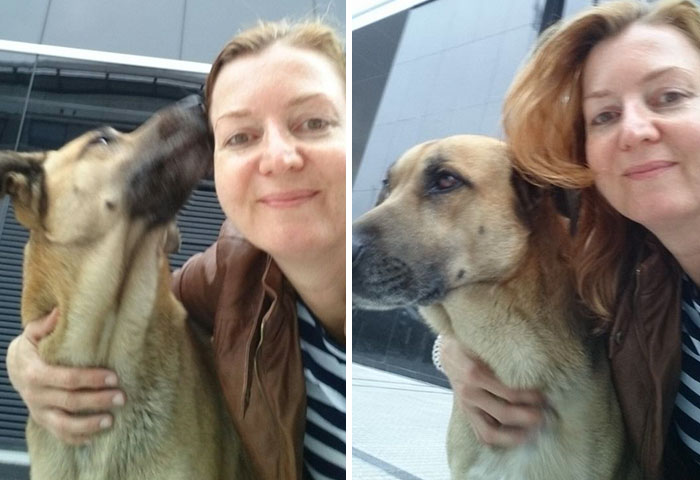 azafata adopta perro
