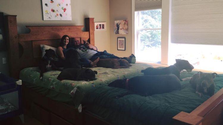 8 perros en la cama