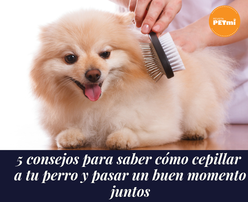 5 consejos para saber cómo cepillar a tu perro y pasar un buen momento juntos