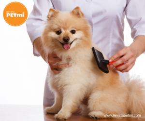 5 consejos para saber cómo cepillar a tu perro y pasar un buen momento juntos1