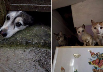 crisis en Venezuela afecta a perros y gatos