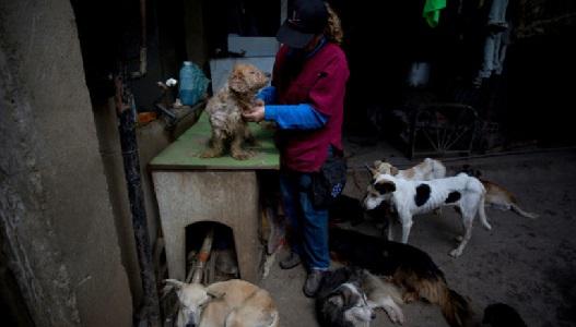 La crisis en Venezuela afecta a perros y gatos que mueren de hambre