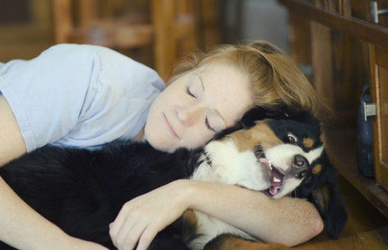 perros odian que los abracen