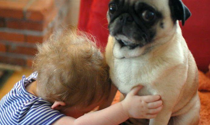 perro odia abrazo