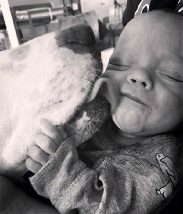Perro adoptado se enamora locamente de su nueva hermanita bebe