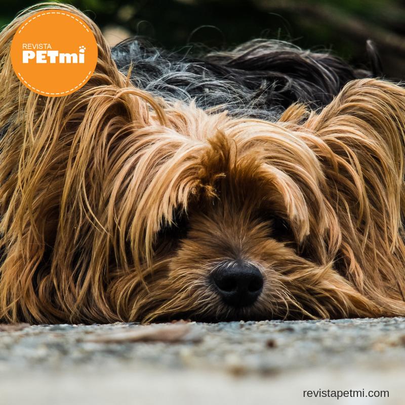 4 cosas que debes hacer si tu mascota se pierda