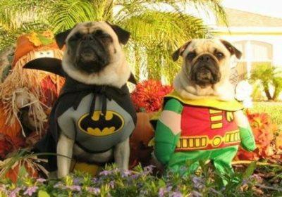 Actividades de halloween para perros en Guatemala
