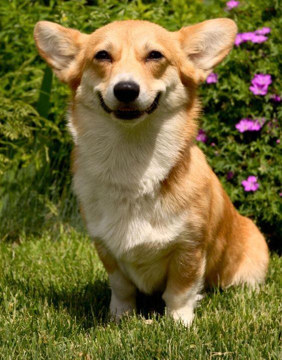 Los perros se ríen