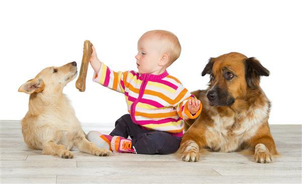 Los perros pueden sentir celos