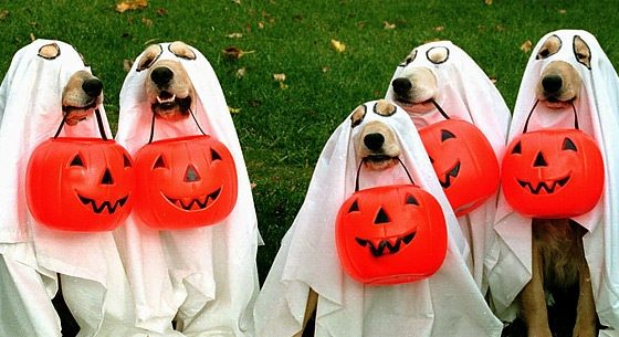 15 ideas para disfrazar a tu mascota en Halloween