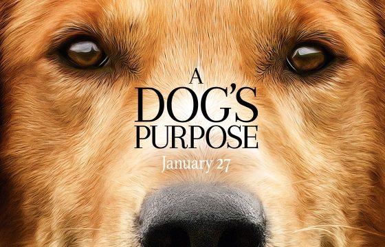 A dogs purpose la pelicula
