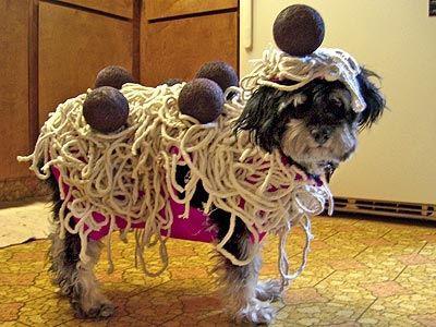 disfraces divertidos para mascotas que puedes hacer en casa