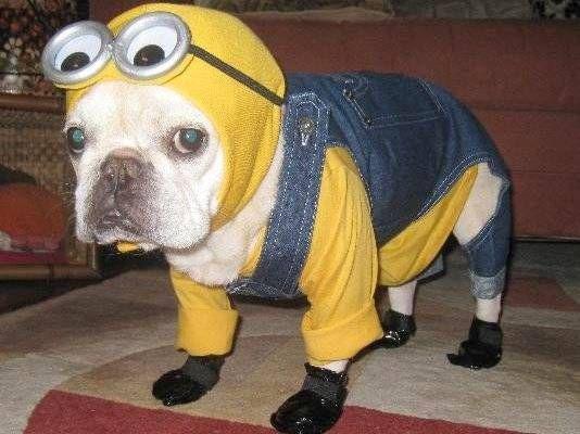 disfraces divertidos para mascotas que puedes hacer en casa-8