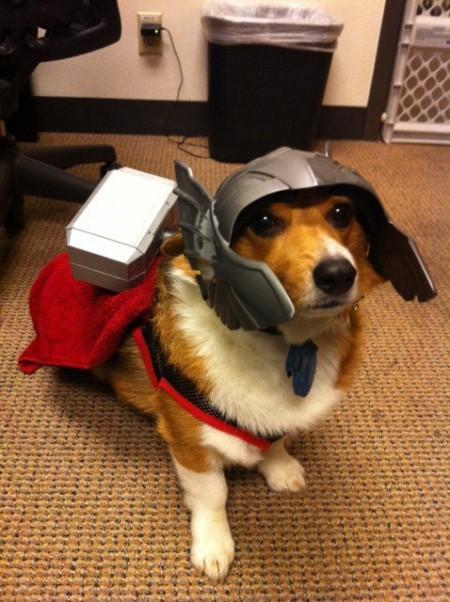 disfraces divertidos para mascotas que puedes hacer en casa-9