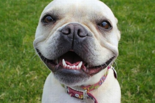 smiling-dog-4