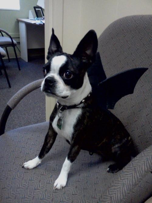 disfraces divertidos para mascotas que puedes hacer en casa-7