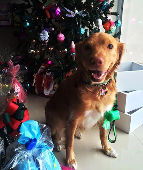 Navidad de los animales, una buena idea desde Costa RIca