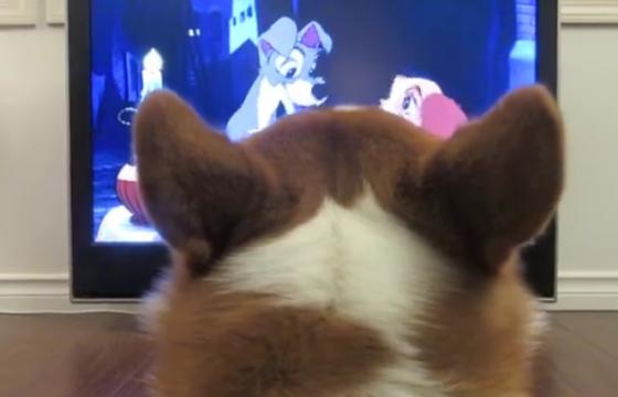 perro-viendo-tv