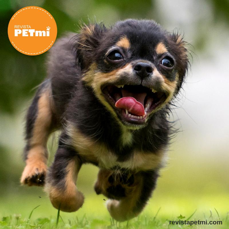 Cuatro de cada cinco perros tienen problemas de encías
