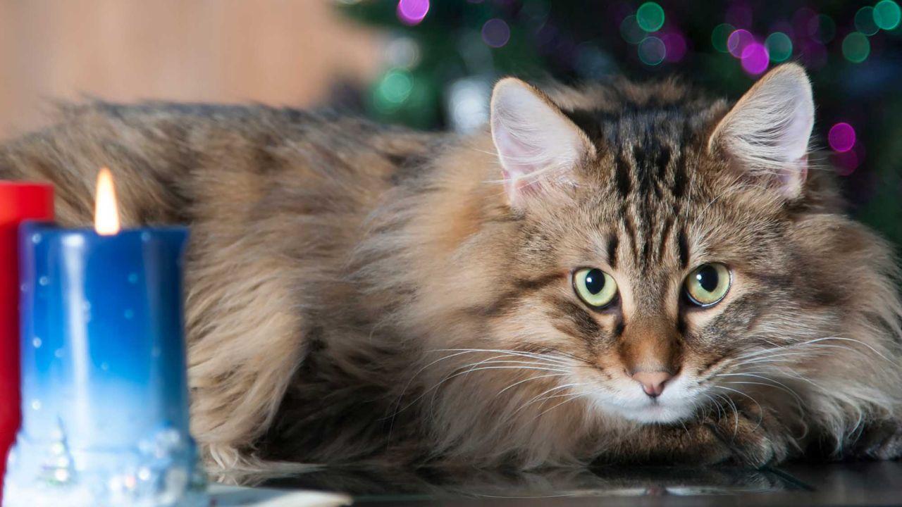 enemigos peligrosos para mascotas durante las fiestas de fin de año: Velas