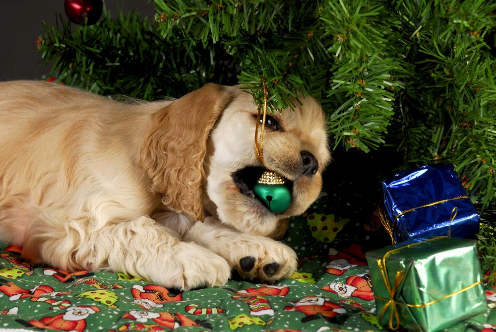 enemigos peligrosos para mascotas durante las fiestas de fin de año