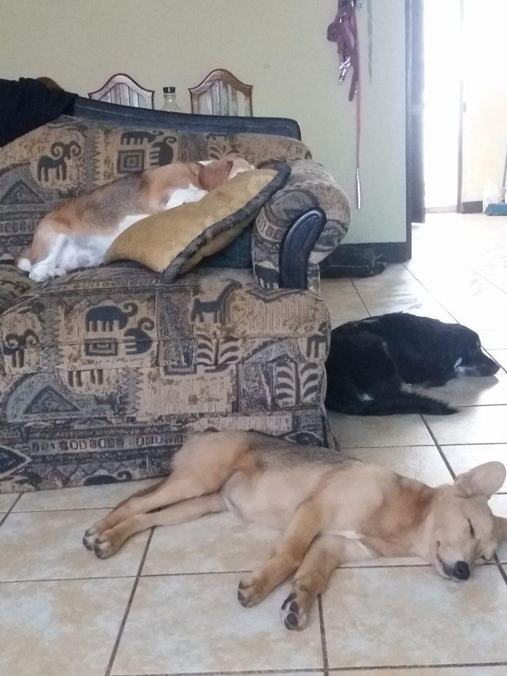 perro-que-duerme-claudia-l