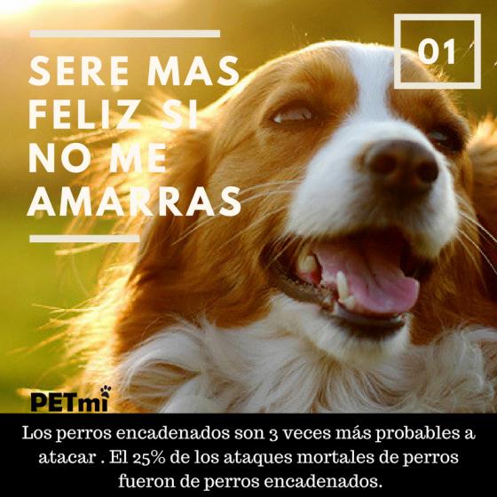 tips de perros