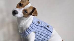 ¿Cómo saber si mi mascota tiene frío?
