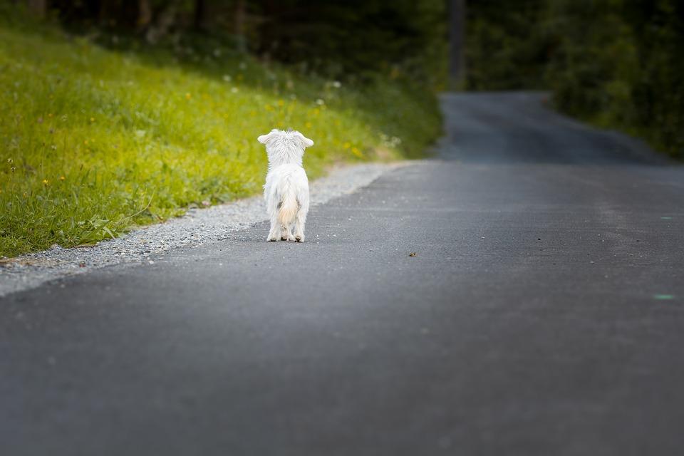 evitar que tu mascota se pierda