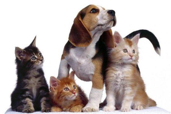Asociaciones de bienestar animal Costa Rica