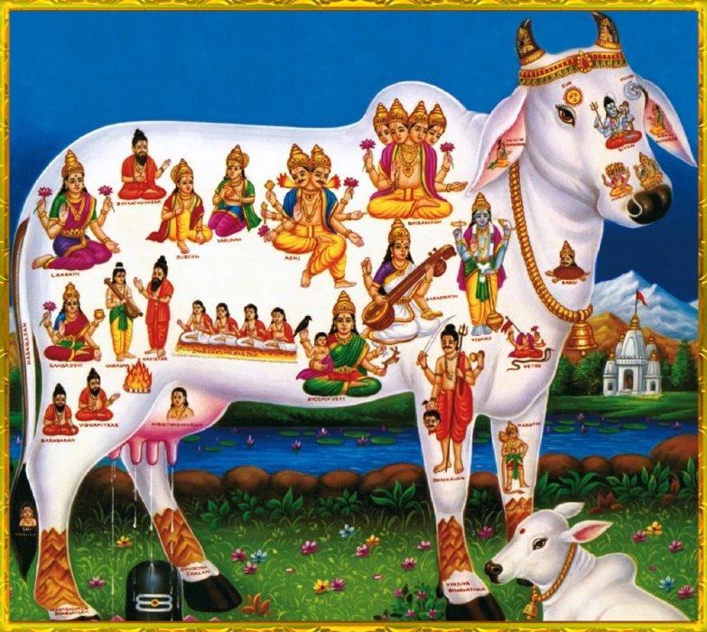 vaca sagrada por hindues