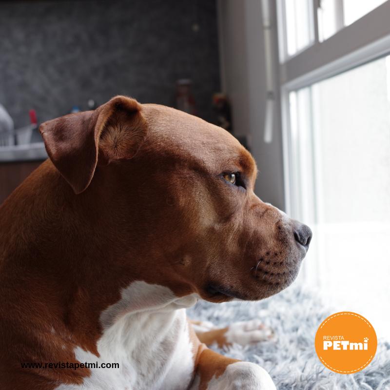 6 recomendaciones para no perder a tu mascota consejo petmi