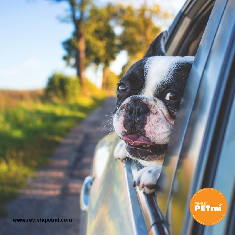 No dejar a tu mascota dentro del carro
