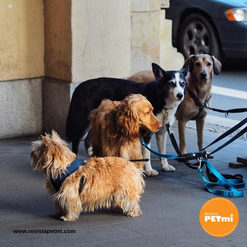 Nunca lo dejes solo en la calle para evitar que tu mascota se pierda