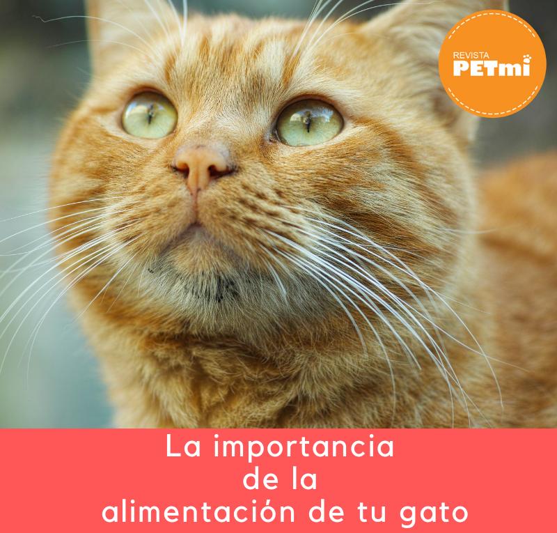 La importancia de la alimentación de tu gato