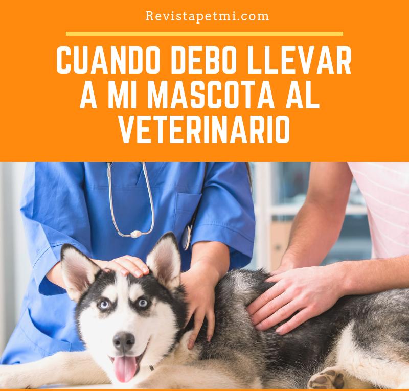 Cuando debo llevar a mi mascota al veterinario