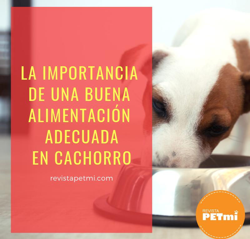 La importancia de la alimentación adecuada en cachorro