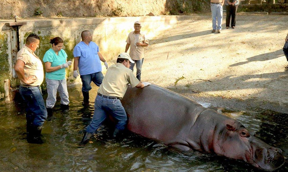 Gustavo Hipopótamo