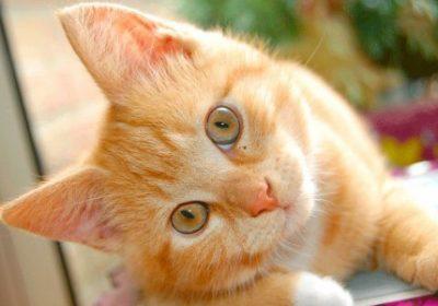alimentación de tu gatos