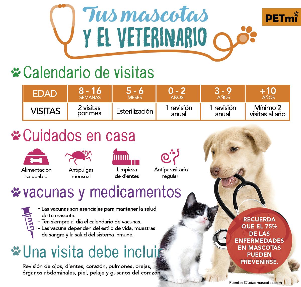 Con qu frecuencia llevas a tu mascota al veterinario revista petmi - Cuando se puede banar a un cachorro ...